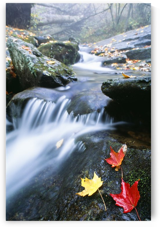 Small Stream, Shenandoah National Park, Virginia, U.S.A. by PacificStock