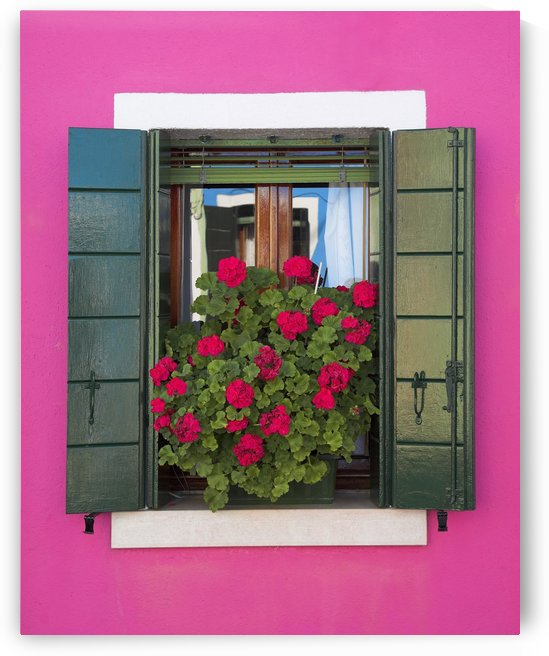 Pink Wall And Green Shutters, Burano, Italy by PacificStock