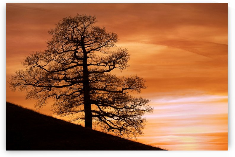 Tree Against A Sunset Sky, Nottinghamshire, England by PacificStock