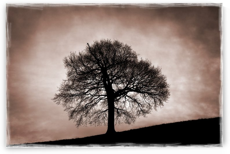 Tree Against A Stormy Sky by PacificStock