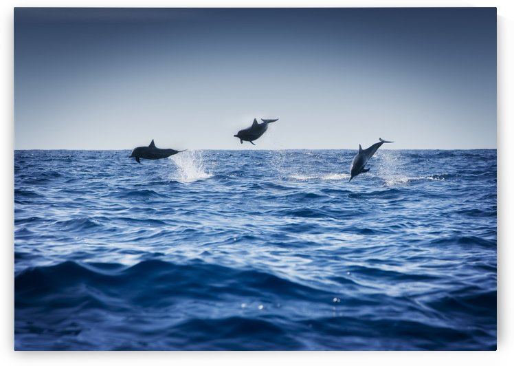 Dolphins Playing In The Ocean by PacificStock