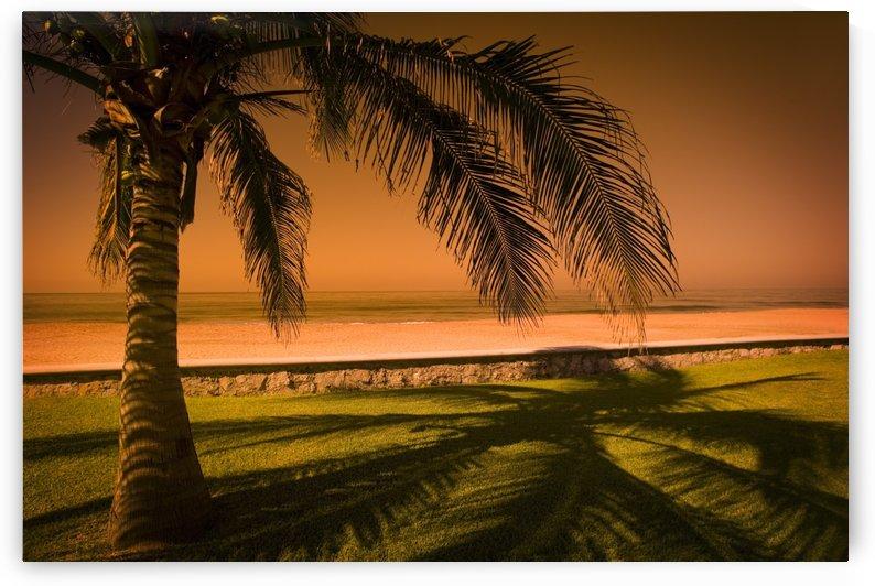 Palm Tree In Mazatlan, Mexico by PacificStock