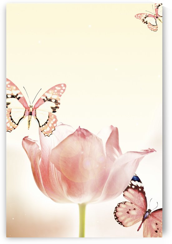 Butterflies And Tulips by PacificStock