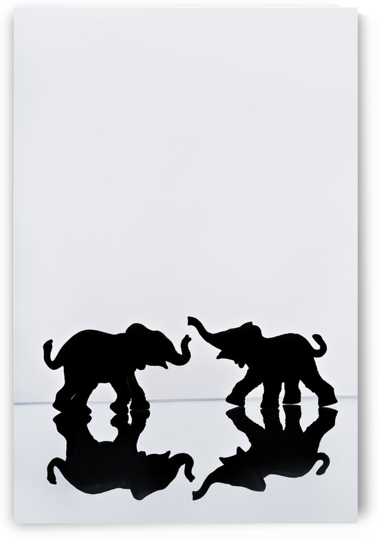 Elephant Pair Reflection by PacificStock