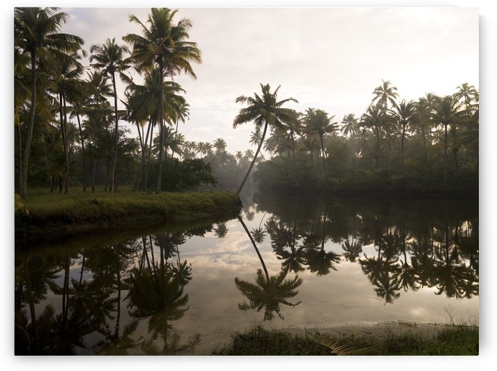 Sunrise And Palm Trees, Kerala, India by PacificStock