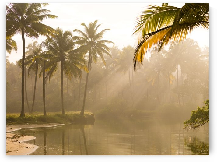 Palm Trees And Sunbeams, Kerala, India by PacificStock