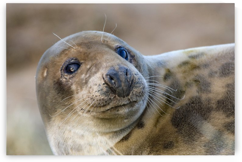 Seal by PacificStock