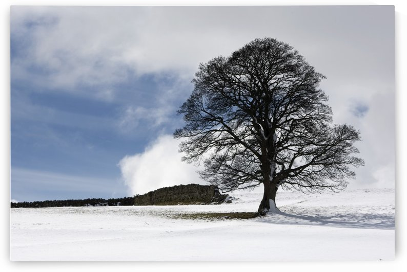 Snowy Field And Tree by PacificStock