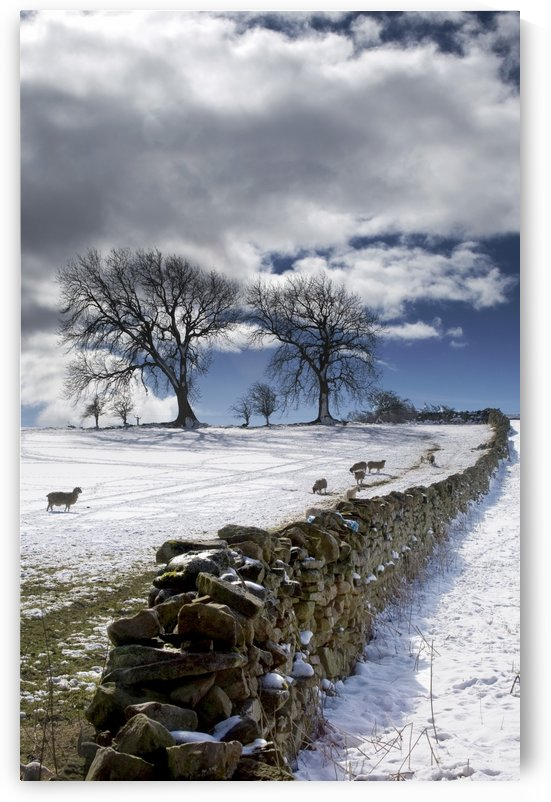 Stone Fence, Weardale, County Durham, England by PacificStock