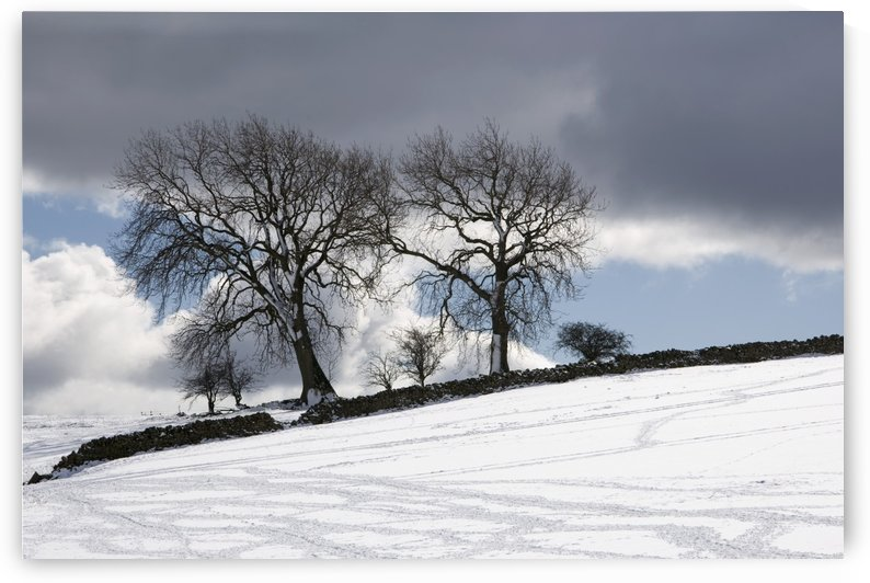 Snowy Field, Weardale, County Durham, England by PacificStock