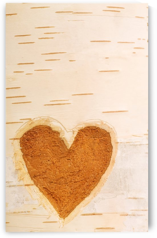 Heart Shape Carved In Bark Of Tree by PacificStock