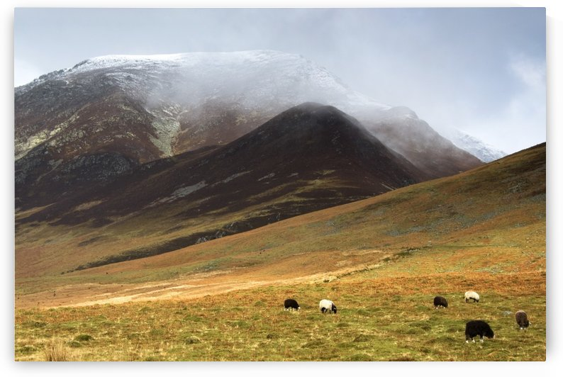 Sheep On Pasture, Lake District, Cumbria, England by PacificStock
