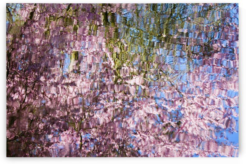 Spring Blossoms Reflecting In Lake by PacificStock