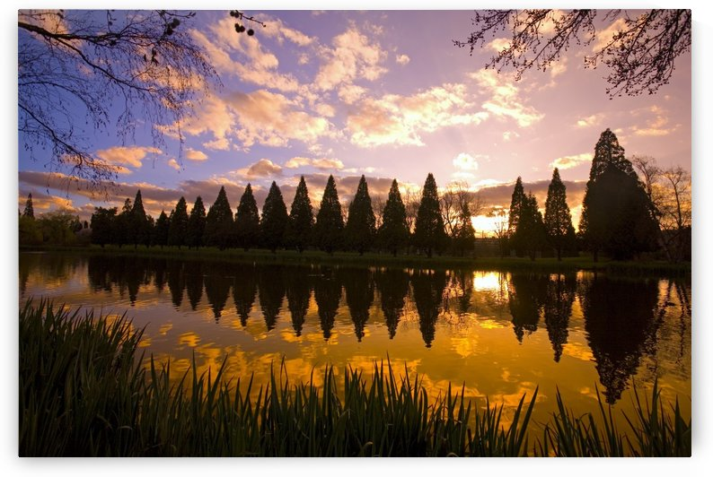 Sunset Reflection In A Park Pond, Portland, Oregon by PacificStock
