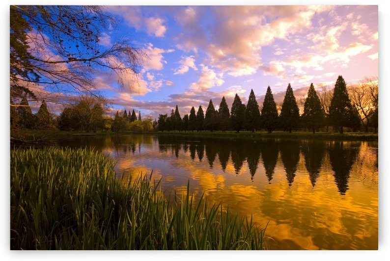 Sunset Reflection On A Pond, Portland, Oregon by PacificStock