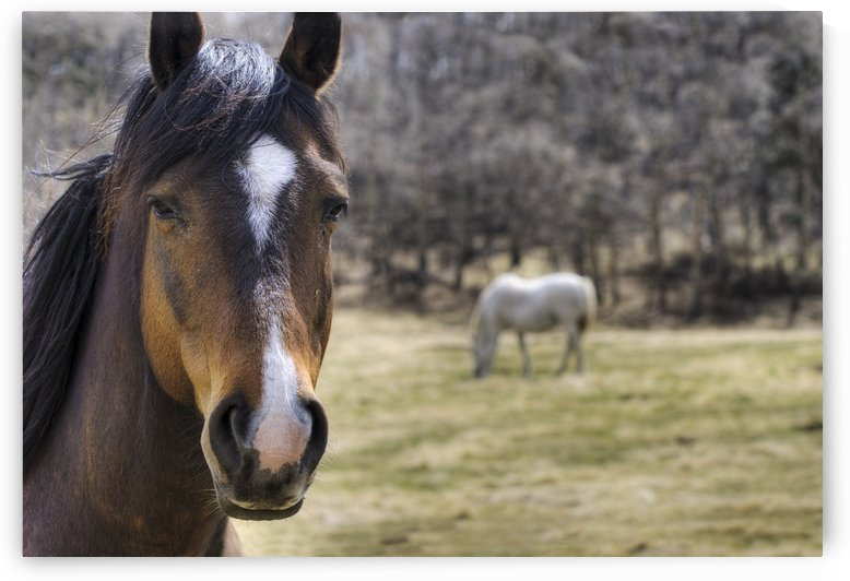Portrait Of A Horse by PacificStock