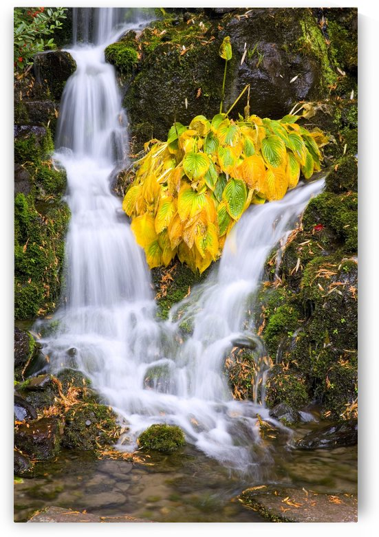 Fall Colors In Crystal Springs Falls, Oregon, Usa by PacificStock