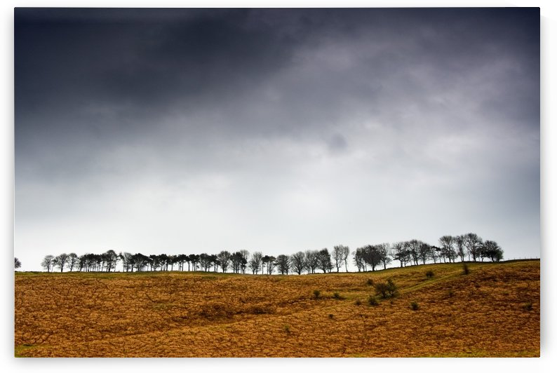 Row Of Trees In A Field, Yorkshire Dales, England by PacificStock