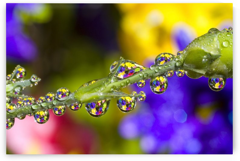Water Drops On A Flower Stem by PacificStock
