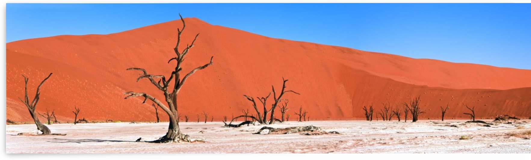 Namib Desert, Namibia, Africa by PacificStock