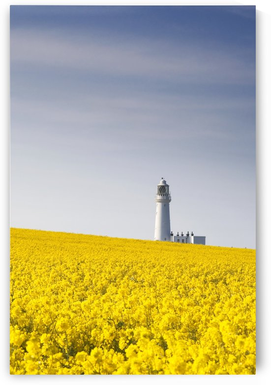Field Of Yellow Flowers, Lighthouse by PacificStock