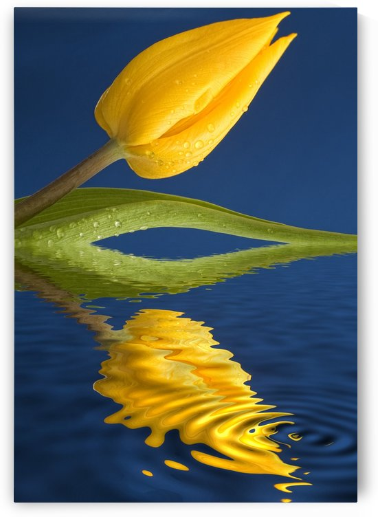 A Yellow Flower Reflected In Water by PacificStock