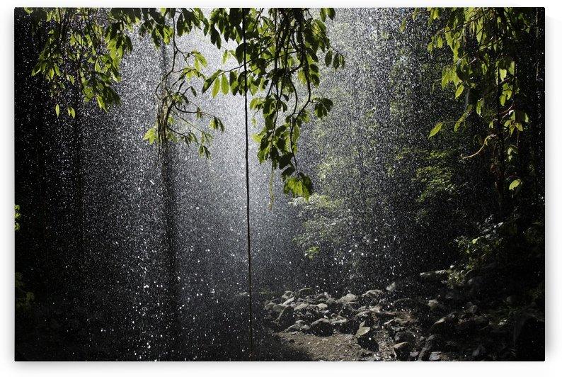 Rainforest, Bellingen, Australia by PacificStock