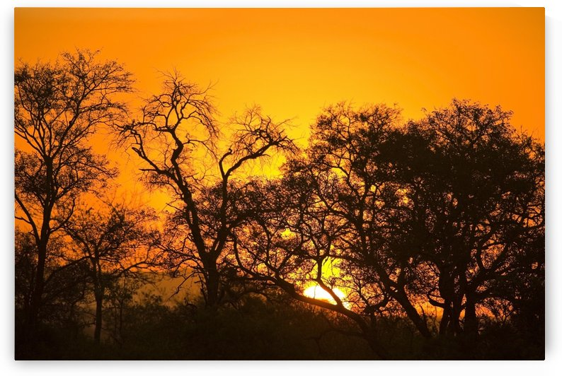 Sunset, Sabi Sand Reserve, Mpumalanga, South Africa, Africa by PacificStock