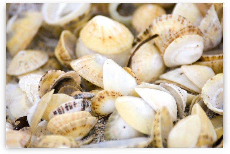 Seashells by PacificStock