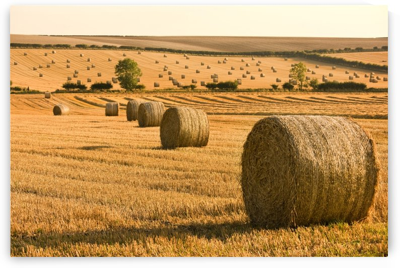 Hay Bales, North Yorkshire, England by PacificStock
