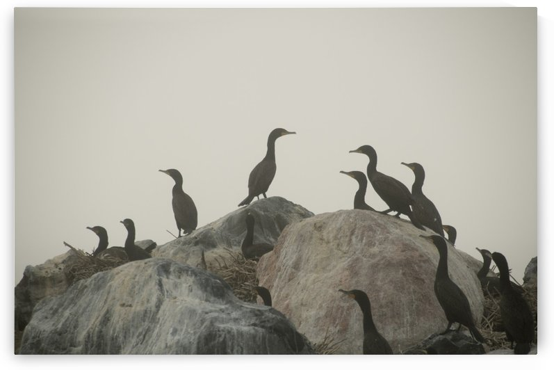 Birds On Rocks by PacificStock