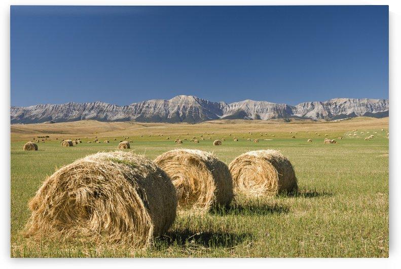 Hay Bales, Alberta, Canada by PacificStock