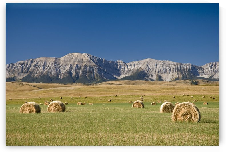 Field Of Hay Bales, Alberta, Canada by PacificStock