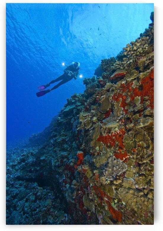 Molokini Maui Hawaii Usa; Scuba Diver At A Volcanic Crater by PacificStock