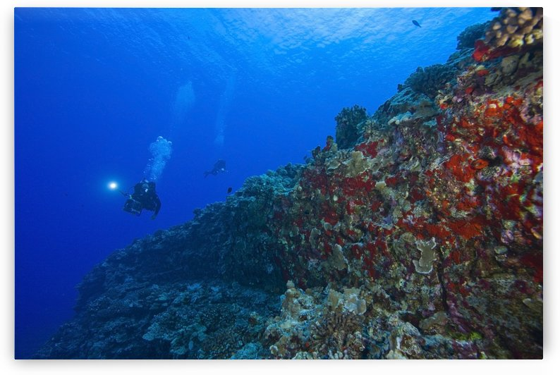 Molokini Maui Hawaii Usa; Scuba Diver With A Video Camera At A Volcanic Crater And Red Sponges ( Porifera) by PacificStock