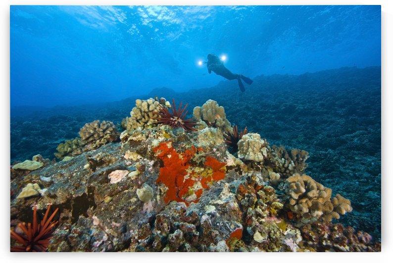 Molokini Crater Maui Hawaii Usa A Single Scuba Diver by PacificStock