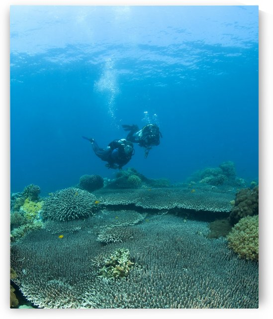 Apo Island Marine Park, Philippines, Asia; Scuba Diver by PacificStock