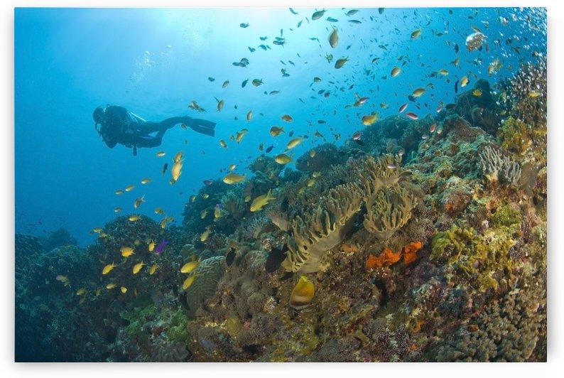 Apo Island Marine Park, Negros Oriental Island, Philippines, Southeast Asia; Scuba Diver by PacificStock