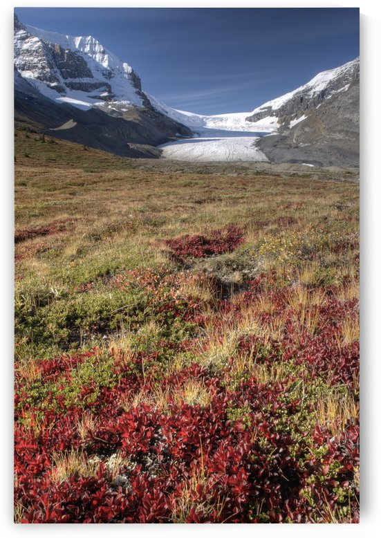 Columbia Icefield, Jasper National Park, Alberta, Canada by PacificStock
