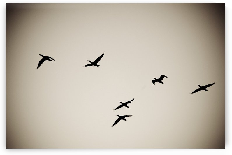 Lake Of The Woods, Ontario, Canada; Birds Silhouetted Against The Sky by PacificStock