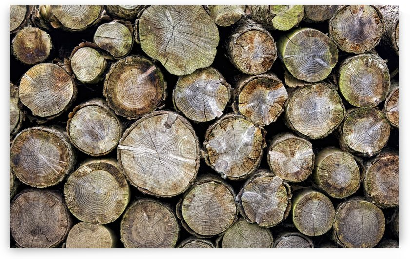 Group Of Logs by PacificStock