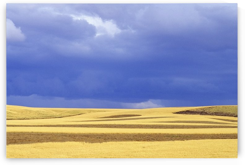 Wheat Fields Near Hermiston, Oregon, Usa by PacificStock