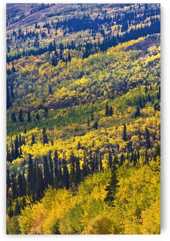 Autumn Countryside, Yukon Territories, Canada by PacificStock