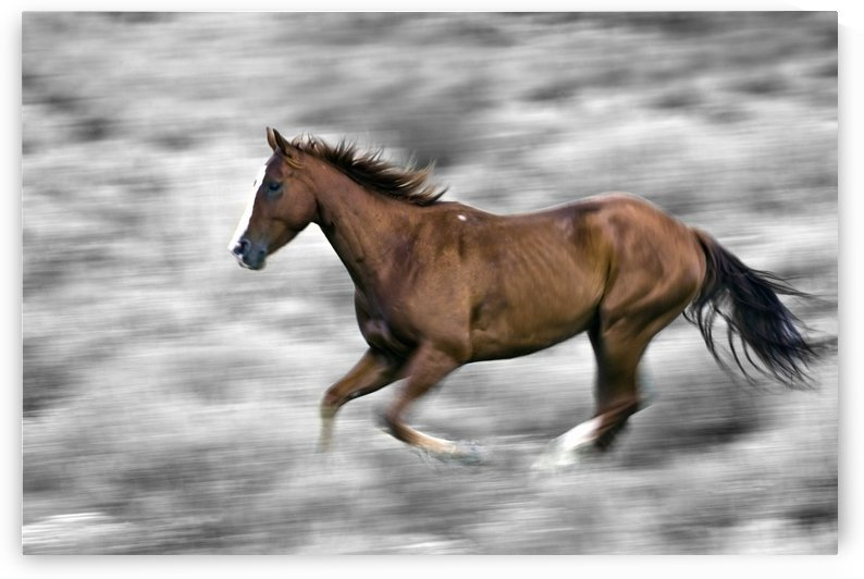 Running Horse by PacificStock