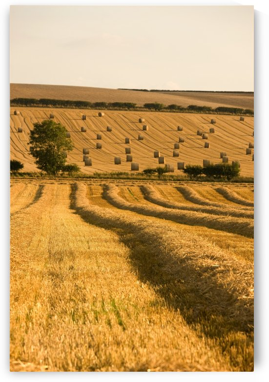 Farmer's Field, North Yorkshire, England by PacificStock