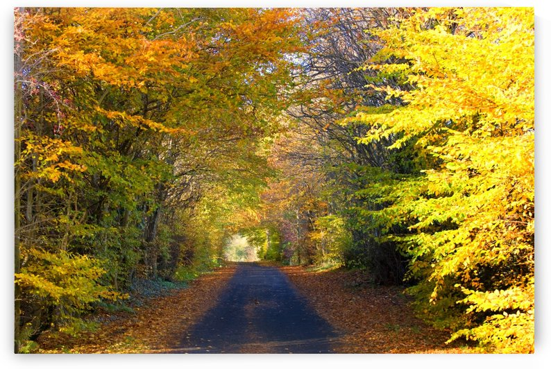 Rural Road, Argyll And Bute, Scotland by PacificStock