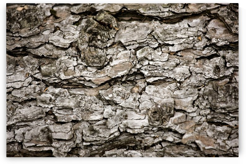 Bark On A Tree by PacificStock