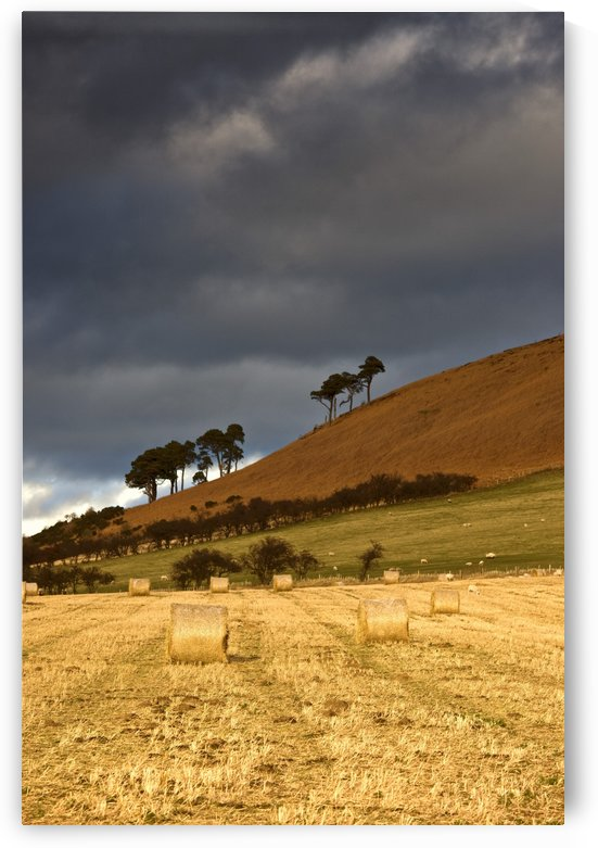 Hay Bales In A Field, Northumberland, England by PacificStock