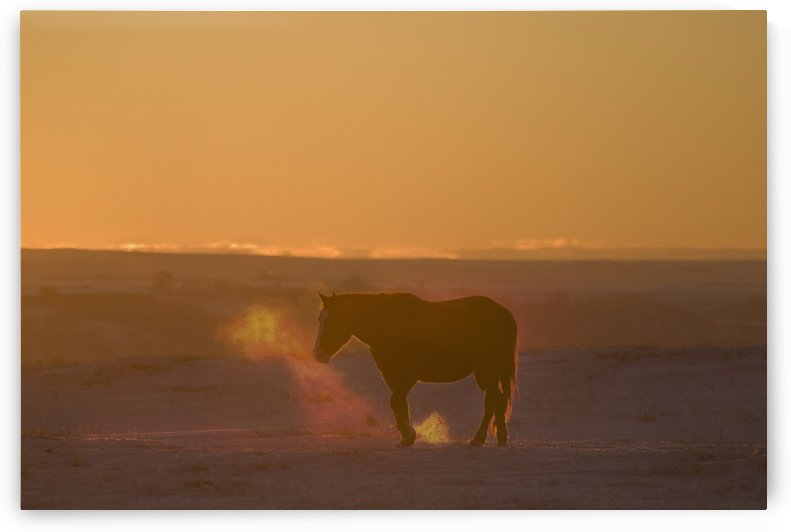 Alberta, Canada; Horse At Sunset by PacificStock
