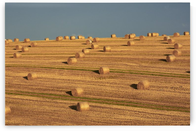 Hay Bales After Harvest, Mallow, County Cork, Ireland by PacificStock